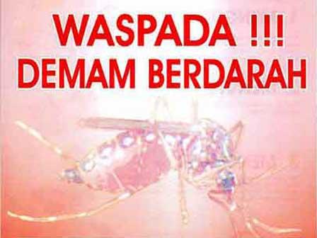 Tips Mengobati Mengatasi Demam Berdarah Dengue parah bisa