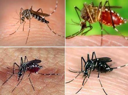 Tips Mengobati Mengatasi Demam Berdarah Dengue satu orang pada saat yang